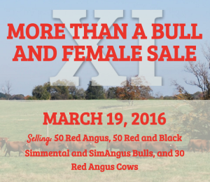 More Than A Bull And Female Sale